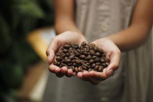 Dia do Café: origem da data relaciona-se com início da colheita